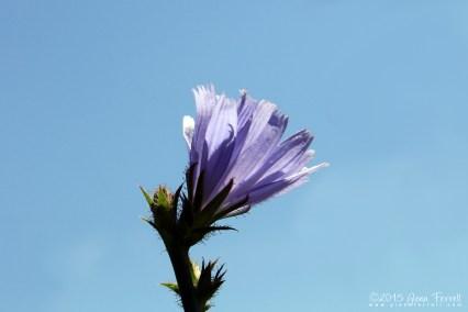 Great Blue Yonder
