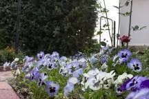 Gardens (54)