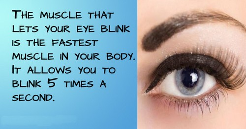 Facts about Human Eyes