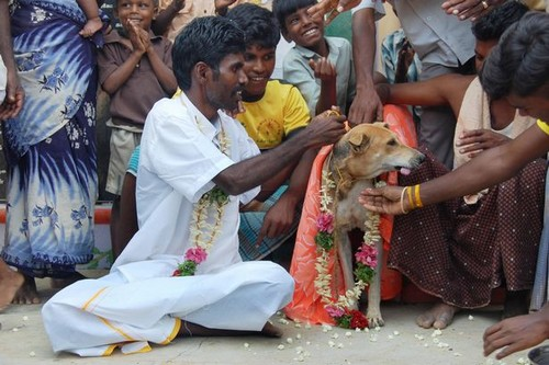Marriage with Animal