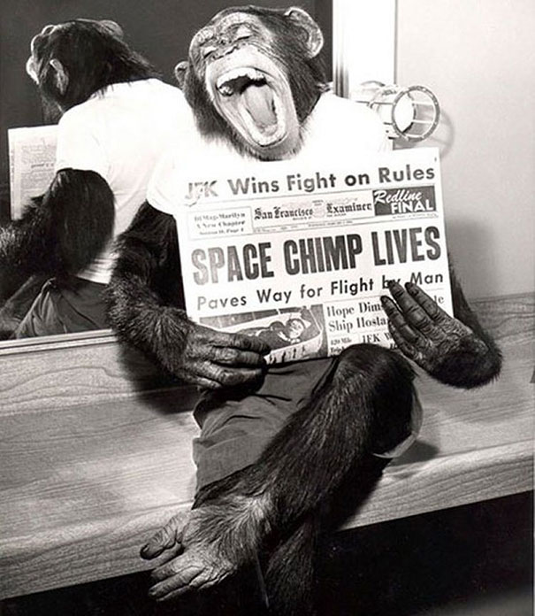 A space chimp posing to camera after a successful mission to space, 1961.