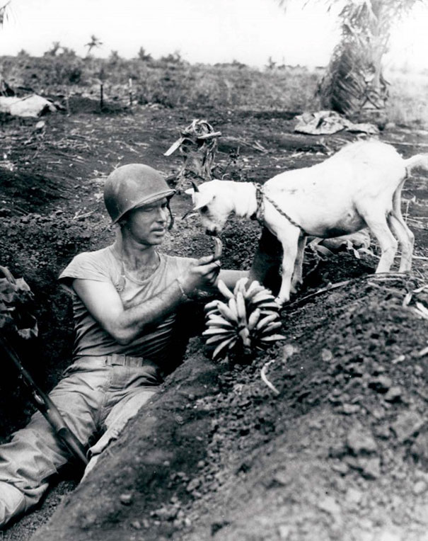 Soldier shares a banana with a goat during the battle of Saipan, ca. 1944.