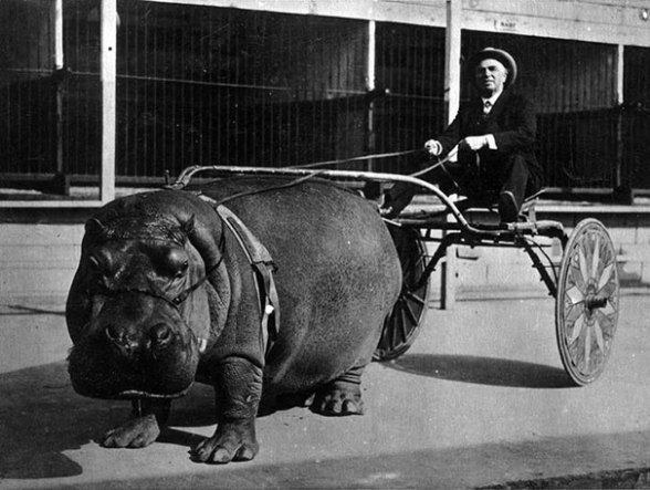 Incredible Odd Photos from Past