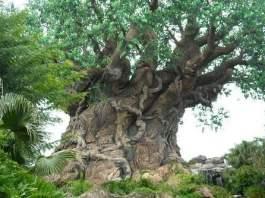 Popular Trees