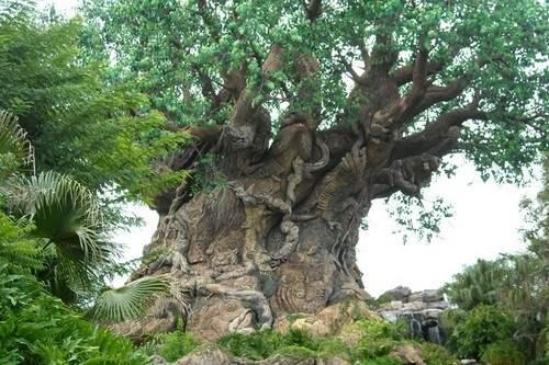 Boyington Oak