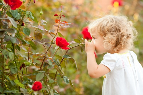 Rose Baby
