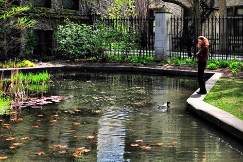 Botany Pond, University of Chicago