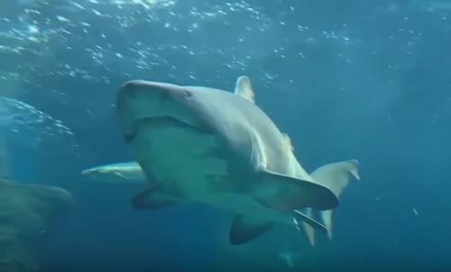 Mysterious Deep Sea Creatures