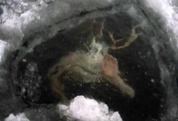 The Creature Under the Ice - Disturbing Online Photos