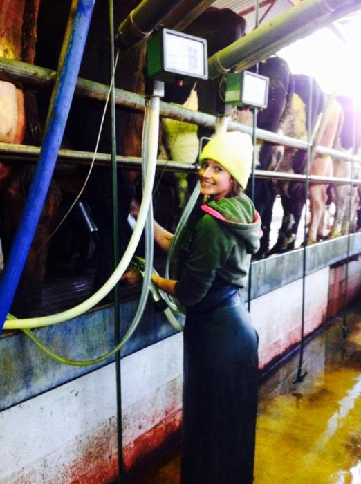 Melissa at work on the dairy farm