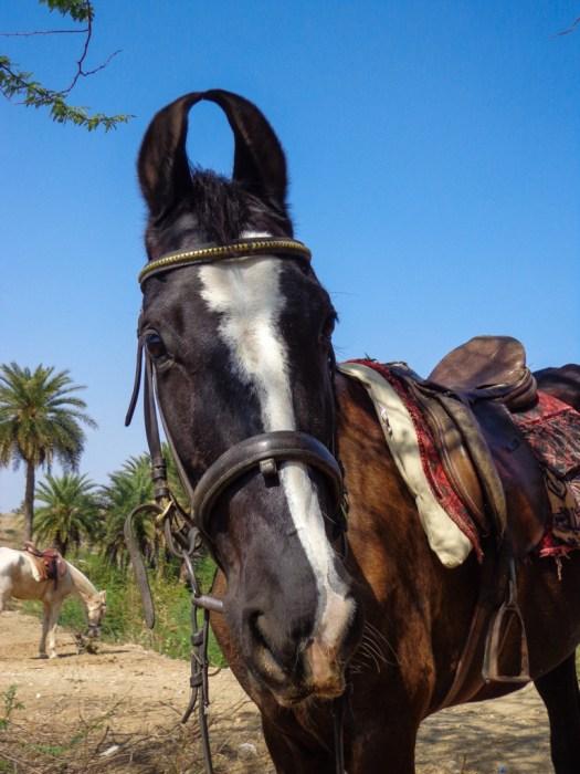 wpid-indian-horse.jpg.jpeg