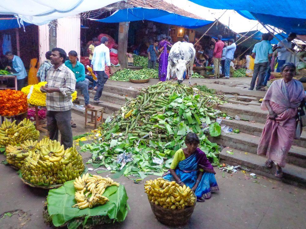 mysore market cow