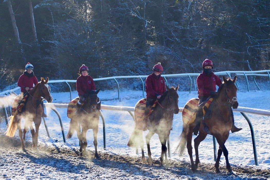 newmarket horses gallops suffolk
