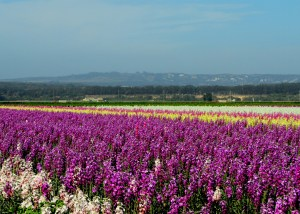 things to do in lompoc california