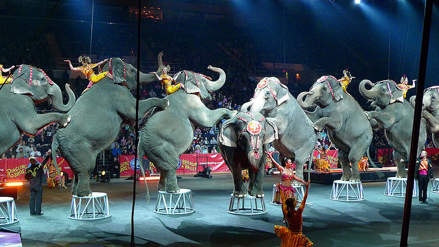 Abusive methods are often used to train circus animals. Photo credit: Kerri9494 via flickr