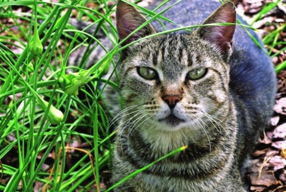 Exaggerated claims that toxoplasmosis in humans is caused by contact with cats may hinder efforts to humanely control cat populations.