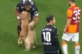 dogs interrupt soccer match