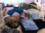 Dog in laundry