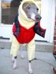 dog outdoor attire