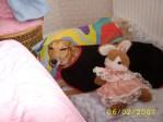 greyhound with stuffed animal bunny