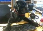 Dog Secretary