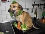 Dog Stew