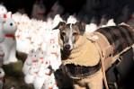 greyhound bundled up for winter