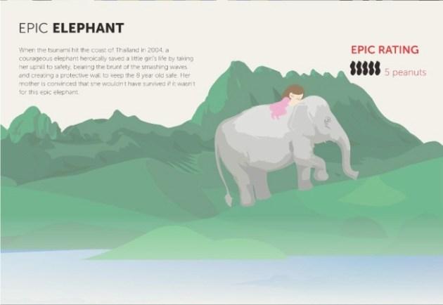epic elephant infographic