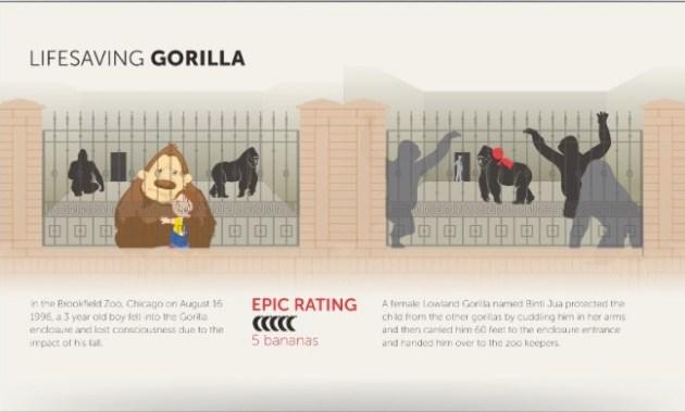 lifesaving gorilla infographic