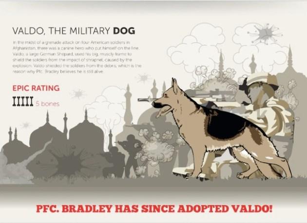military dog infographic