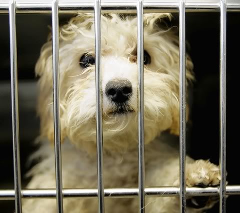 California made big advances in regulating puppy mills and pet stores that sell puppies sourced from irresponsible breeders. Photo Credit:  Animal Law Coalition
