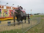 Cole Brothers Elephant Rides