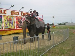 An elephant being used for rides at a show in Wilmington, NC. Photo Credit: Facebook