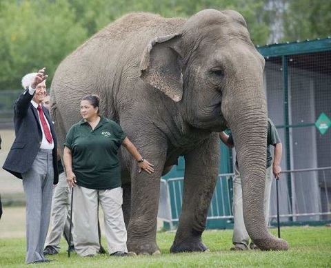 Barker waves as he meets Lucy the elephant. Photo Credit: Ian Jackson, Associated Press