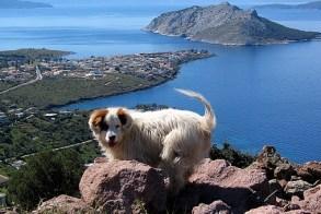 Dog in Greece. Photo Credit: Aegina Greece