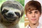 Sloth And Justin