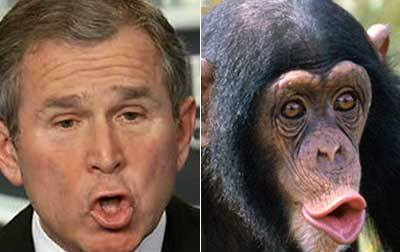 George W. or chimp? Or both? Photo Credit: webupon.com