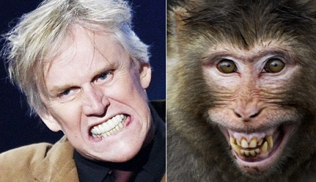Gary Busey or smiling monkey? Photo Credit: Kevin Winter/Getty: Channi Anand/AP