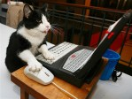 Animals who think they are human: computer cat on laptop