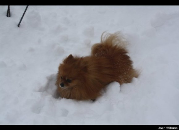 Marlo's first attempt at trudging through deep snow.