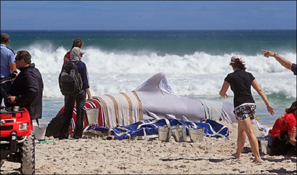 Rescue volunteers around a whale at Noordhoek Beach, South Africa. Photo Credit: KOMO News