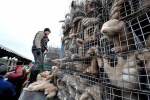 Fur Trade Animals In Cramped Cages
