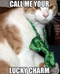 Cat Ready For St. Patricks Day