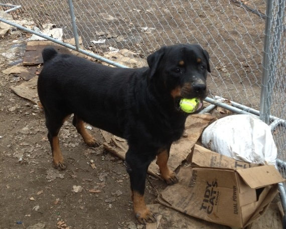 Bruno, the last homeless dog from Hurricane Sandy, gets a new home. Photo Credit: Nassau County SPCA