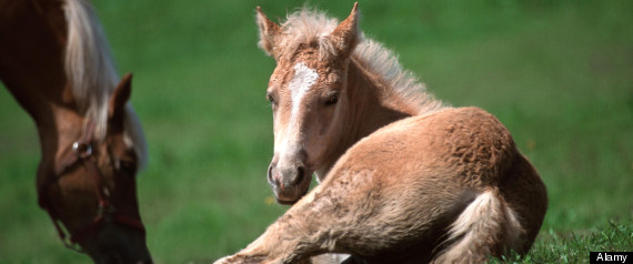 Oklahoma approves horse slaughter