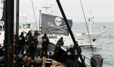 Sea Shepherd led a successful campaign, Zero Tolerance, in 2012-2013. Photo Credit: via Ecorazzi