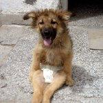 Borko Bulgarian Rescue Dog