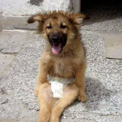 Share Borko's story. Photo Credit: K9 Rescue Bulgaria