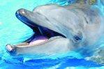 Wild Caught Captive Dolphin