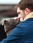 man and puppy dog cute picture